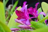 De mi jardín 835