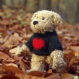 Cute teddy!