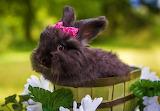 ☺♥ Cute little bunny...