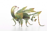 "Art Science tumblr myfrogcroaked ""insects of resin and brass"" ""H"