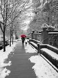 Red umbrella & dog