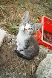 Sirrocco / Kitty Sirrocco 02