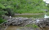 Mile 1374 Beaver Dam near Island Pond