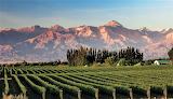 Vineyard at foot Andes Mountains