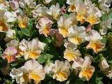 Spring flowers - Flores de primavera