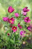 Kwiaty-foto-Radosław Gajzler