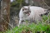 Wary white cat