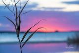 Grass beach sunrise