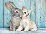 bunny and kitten