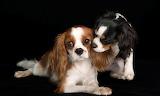 Puppy love....................................x