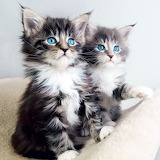 Blue Eyed Kittens