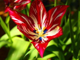 Red exotic-flower
