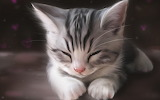 Cat-animals-kittens-sleeping