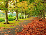 Leaves-trees-park-grass-road-7265