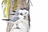 Birds Somewhere in Belize