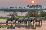 Elephants, river, sunset, South Africa