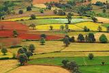 Stano szenczi patchwork landscape