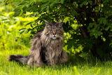 Kot wśród zieleni
