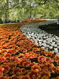 keuekenhof_flowers