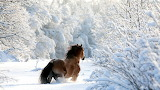 Horse in the winter forest