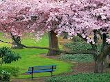Árbol florido