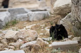 Black Cat in Greece