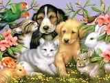 Loveable Pets