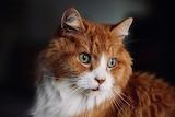 Jasper At 16