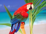 Parrot, colourful, palm tree sea