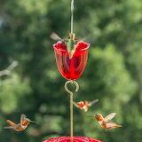 ^ Hummingbirds
