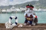 cat dressed as a pirate