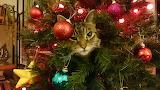 Kitty in the Xmas Tree!!!