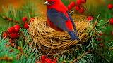 Red-blue bird