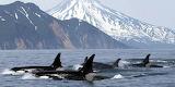 El mar y las ballenas