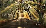 Botany Bay Road. Edisto Island. South Carolina