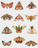 Insects tumblr dogstardreaming Moths