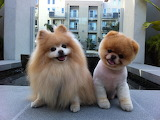 Actual Dogs