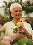 Flowers - Dame Judi Dench rose