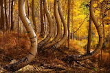 Trees - Natural Curves