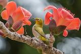 Bird, flowers, branch, nature