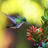 Lovely Hummingbird...