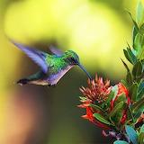 Lovely Hummingbird...