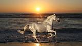 Sunset Ocean run