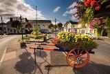Flowers, Ahoghill, Northern Ireland