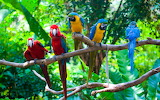 Parrots, birds, branches, tree, colourful