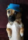 Clydes New Hat