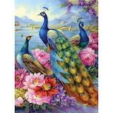 ilustration bird