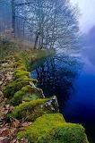 Mossy Riverbank