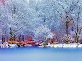 Paysage japonais-hiver