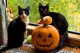1halloween-cats